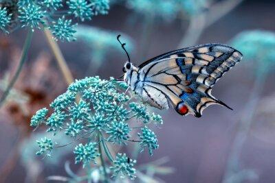 Plakat Closeup beautiful butterfly sitting on the flower.
