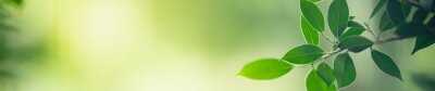 Plakat Closeup nature view of green leaf on blurred greenery background in garden with copy space for text using as summer background natural green plants landscape, ecology, fresh cover page concept.