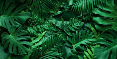 Plakat closeup nature view of tropical green monstera leaf and palms background. Flat lay, fresh wallpaper banner concept
