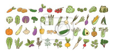 Plakat Collection of fresh ripe organic vegetables, cultivated root crops, salads, herbs isolated on white background. Bundle of natural design elements. Colorful vector illustration in line art style.