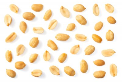 Plakat collection of single roasted peeled peanut isolated on white background, top view