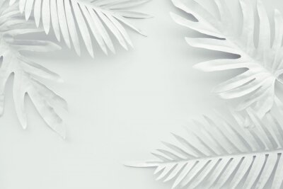 Plakat Collection of tropical leaves,foliage plant in white color with space background.Abstract leaf decoration design.Exotic nature art