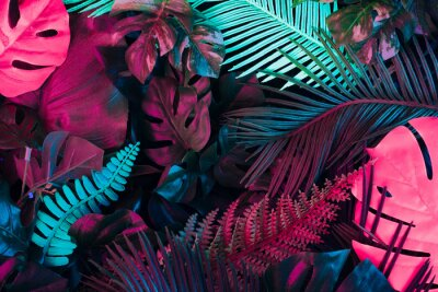Plakat Creative fluorescent color layout made of tropical leaves. Flat lay neon colors. Nature concept.