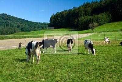Plakat czarne i białe krów na farmie