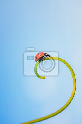 Plakat czerwona biedronka czołgająca się na spiralnym ostrzu trawy na tle niebieskiego nieba
