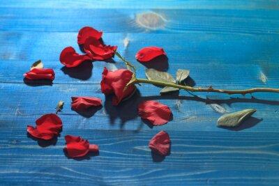 Plakat czerwona róża na niebieskim drewnianym stole