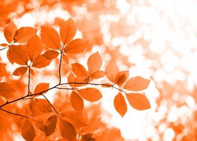 Plakat czerwone jesienne liście