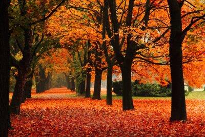 Plakat czerwony jesień w parku