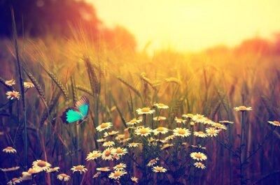 Plakat Daisy motyl latający łąka kwiaty wiosenne