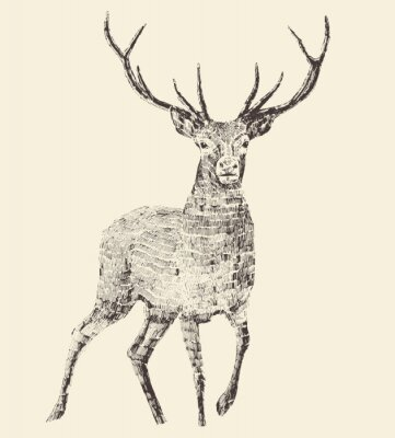 Plakat Deer grawerowania, vintage ilustracji wektorowych