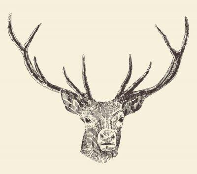 Plakat Deer Head Vintage ilustracji, wyciągnąć rękę, Wektor