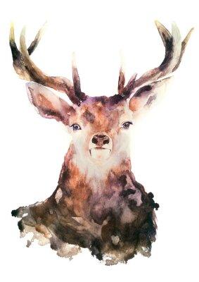 Plakat deer in watercolor
