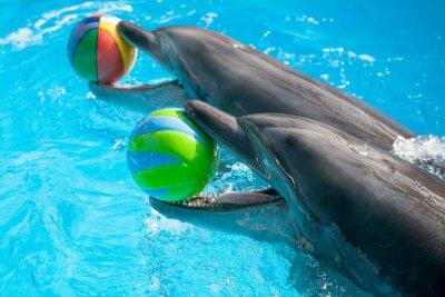 Plakat Delfin gry z kulkami