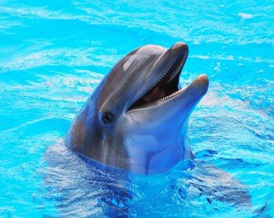 Plakat delfiny pływanie