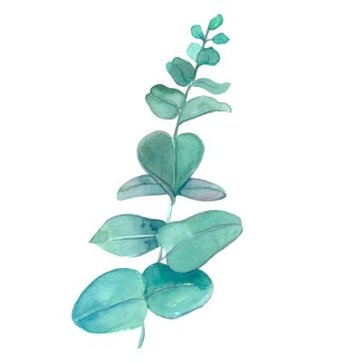 Plakat Design elements green twigs, leaves for a bouquet. Foliage vegetation, eucalyptus natural leaves in a watercolor style.