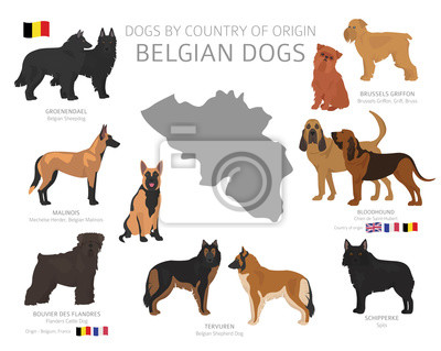 Plakat Dogs by country of origin. Belgian dog breeds. Shepherds, hunting, herding, toy, working and service dogs  set