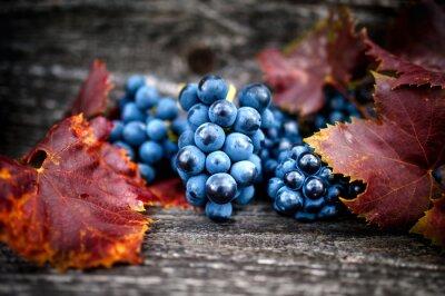Plakat Dojrzałe winogrona na jesieni zbiorów w winnicy z liśćmi