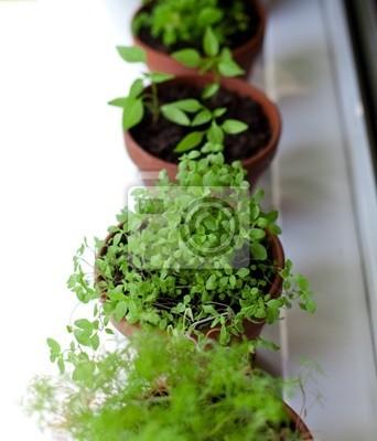 Plakat doniczkowe zioła na parapecie