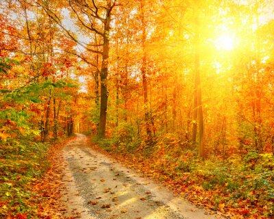 Plakat Droga w lesie jesienią