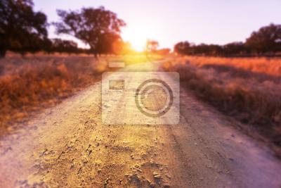 Plakat Droga w polu