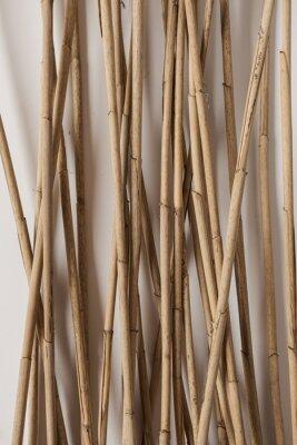 Plakat Dry cane reeds stalks on white background. Minimalist nature concept.