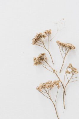 Plakat Dry floral branch on white background. Flat lay, top view minimal neutral flower composition.
