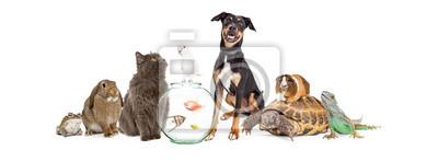 Plakat Duża grupa zwierząt zwierzęta razem