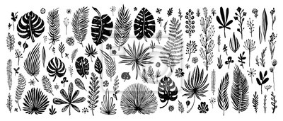 Plakat duży Zestaw czarnych doodle elementów. egzotyczne tropikalny liści na białym tle. Wektorowa botaniczna ilustracja. Świetne elementy do projektowania kart gratulacyjnych, banerów i innych