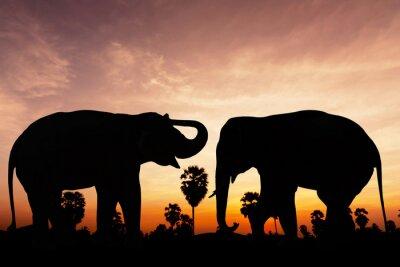 Plakat Dwa słoń na czas zmierzchu