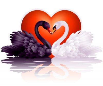 Plakat Dwa wdzięczne łabędzie w miłości
