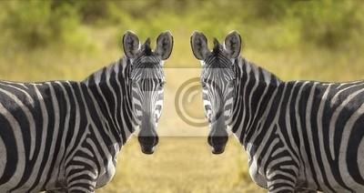 Plakat dwa zebra