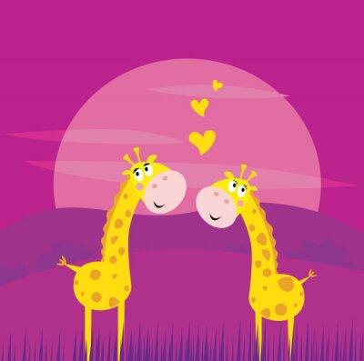 Plakat Dwie żółte Żyrafy afrykańskim w miłości. WEKTOR