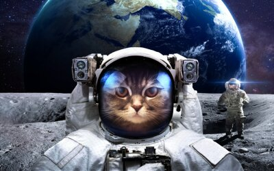 Plakat Dzielny kot astronauta na spacer kosmiczny. Ten obraz elementy dostarczone przez NASA.