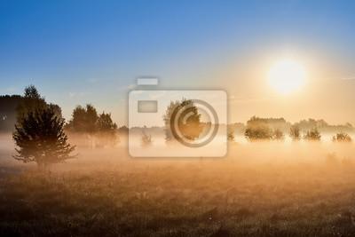 Dzikie mglisty krajobraz łąki.