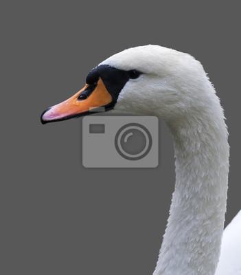 Ekstremalne tryskać zdjęcia