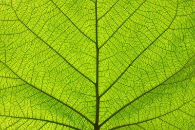 Plakat Ekstremum zamknięta up tekstura zielone liść żyły
