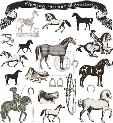éléments chevaux équitation et