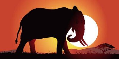 Plakat Elephant-couche de soleil