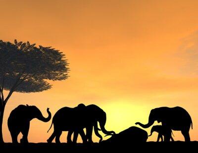 Plakat Elephants Morn Their Dead at sunset, a very tender scene.