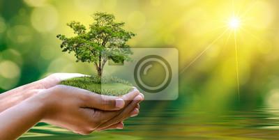 Plakat environment Earth Day W rękach drzew rosnących sadzonek. Bokeh zielonym tle Kobieta strony gospodarstwa drzewa na trawie dziedzinie przyrody Koncepcja ochrony lasów