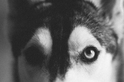 Plakat Extreme Close Up Of Animal Eye