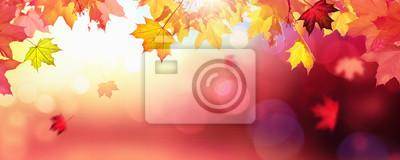 Plakat Falling Autumn Maple Leaves Naturalne Kolorowe Tło