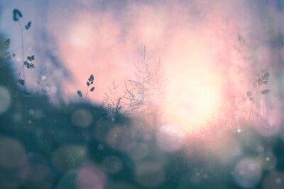 Plakat Fantasy słońca bokeh niewyraźne tło łąka