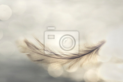 Plakat feather flies gently into the sky, concept of lightness