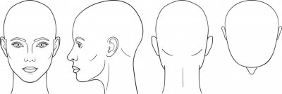 Plakat Female head vector illustration in front, back, top, side view