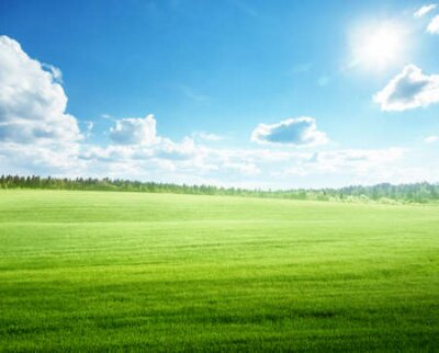 Plakat field of grass and perfect blue sky