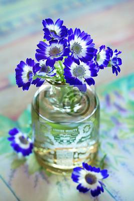 Fioletowe Kwiaty Cineraria Mezcla W Wazonie Na Stole Plakaty Redro