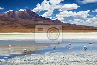 Plakat Flamingi w lagunie na boliwijskiej Altiplano