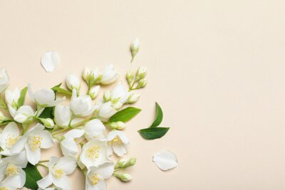 Plakat Flat lay composition with beautiful jasmine flowers on beige background. Space for text
