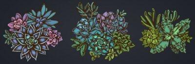 Plakat Flower bouquet of colored succulent echeveria, succulent echeveria, succulent